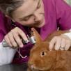 Impfung Kaninchen RHD 2